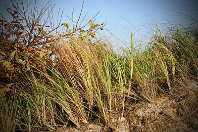 Photograph - Dune Grass by Cate Franklyn