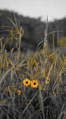 Photograph - Dune Grass Daisies Delray Beach Florida by Lawrence S Richardson Jr