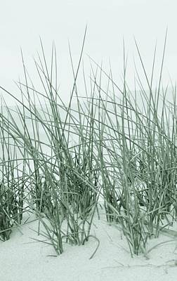 Photograph - Dune Grass Impression by Werner Lehmann