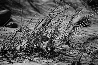 Photograph - Dune Grass In B/w by Bonnie Bruno