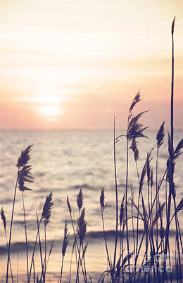 Photograph - Dune Grass In The Sunset by Debra Fedchin