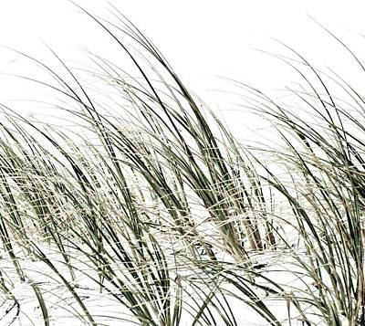 Photograph - Dune Grass Inpression by Werner Lehmann