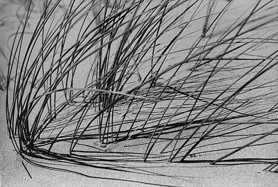 Photograph - Dune Grass by John Farley
