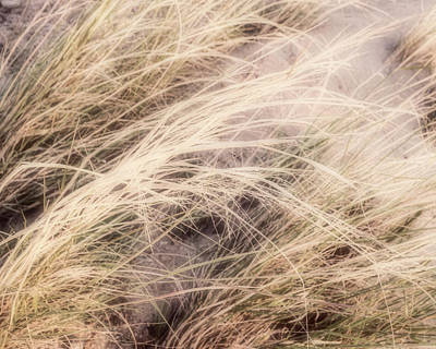 Photograph - Dune Grass Nature Photography by Ann Powell