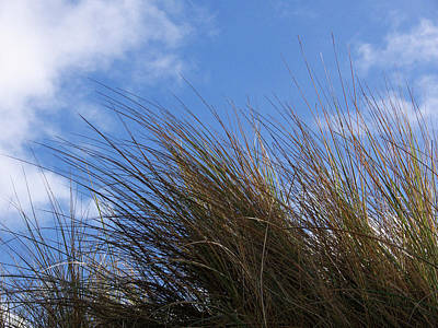 Photograph - Dune Grass by Colin Clarke