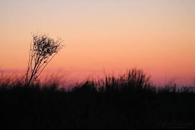 Photograph - Dune Grass Sunrise by Robert Banach