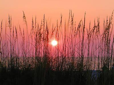 Dune Grass Sunset Art Print by Bill Cannon
