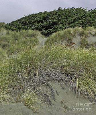 Photograph - Bodega Dunes #3 by Joyce Creswell