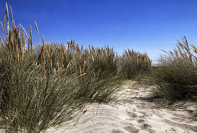 Photograph - Dune Grasses by Shirley Mitchell