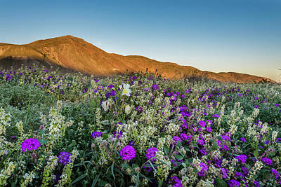 Photograph - Dune In Bloom by Scott Cunningham