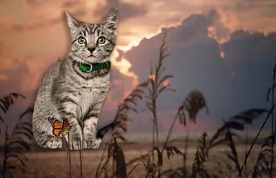 Wall Art - Digital Art - Dune Kitty by Cynthia Leaphart
