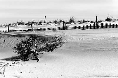 Photograph - Dune Life by John Rizzuto