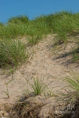 Photograph - Dune Of Sea Oats by Jennifer White