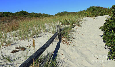 Photograph - Dune Pathway by Mary Haber