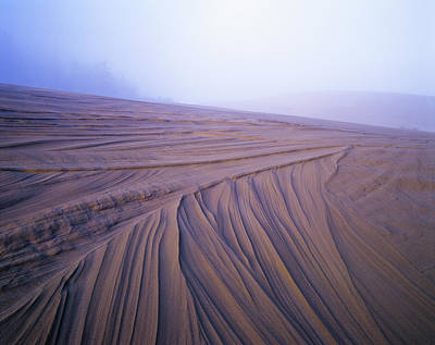 Photograph - Dune Patterns by Robert Potts