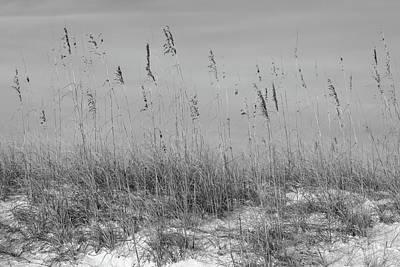 Photograph - Dune Seaoats by Paul Rebmann