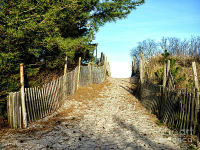 Photograph - Dune Walk At Harvey Cedars by John Rizzuto