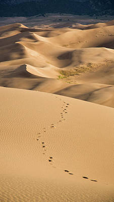 Photograph - Dunefield Footprints by Adam Pender