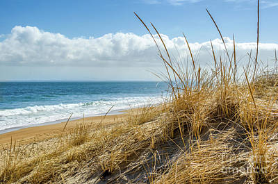 Photograph - Dunes At Plum Island by Mike Ste Marie