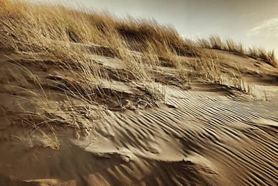 Photograph - Dunes by Mihaela Pater