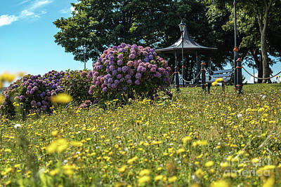 Photograph - Dungarvan Park 2 by Marc Daly