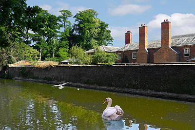 Photograph - Swan And Gulls On The River by Gill Billington