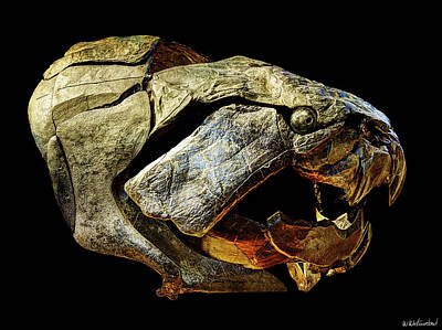 Photograph - Dunkleosteus Skull On Black by Weston Westmoreland
