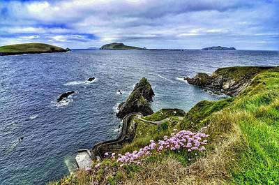Photograph - Dunquin Flowers  by Joe Ormonde