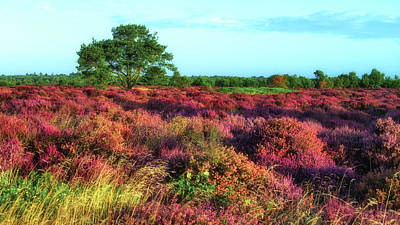 Photograph - Dunwich Heath I by James Billings
