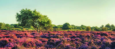 Photograph - Dunwich Heath II by James Billings