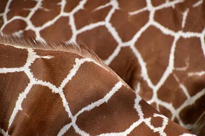 Giraffe Digital Art - Duo Giraffe Pattern by Mihaela Pater
