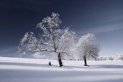 Photograph - Duo White by Philippe Sainte-Laudy
