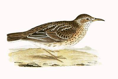 Dupont's Lark Art Print by English School