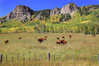 Photograph - Durango Moos by Donna Kennedy
