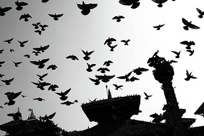 Photograph - Durbar Square Temple Birds by Aidan Moran