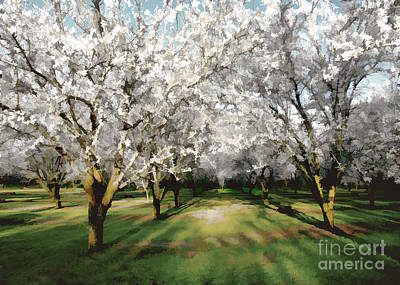 Photograph - Durham Almond Blossoms by Kathleen Gauthier