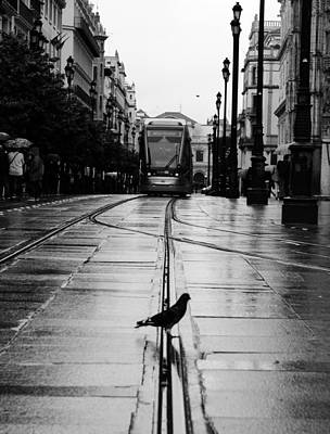 Photograph - During A Rainy Day by Andrea Mazzocchetti