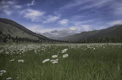 Photograph - Durnan Meadow by Patricia Dennis