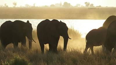 Photograph - Dusk Along The Chobe River by Jennifer Wheatley Wolf