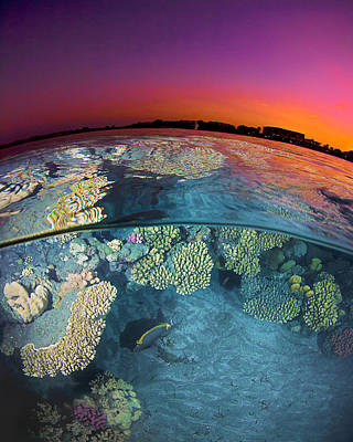Dusk Wall Art - Photograph - Dusk At The Red Sea Reef by Henry Jager
