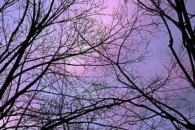 Photograph - Dark Tree Web With Colorful Sky by Cora Wandel
