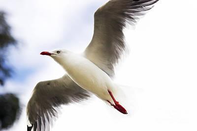 Flying Seagull Photograph - Dusk Flight by Jorgo Photography - Wall Art Gallery