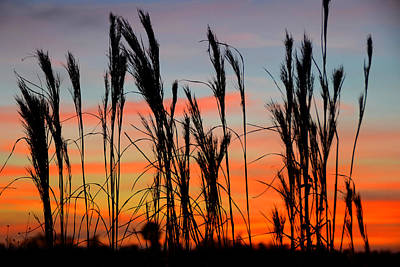 Photograph - Dusk In Big Cypress by David Lee Thompson