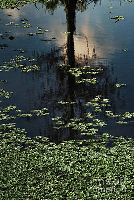 Photograph - Dusk In The Swamp by Margie Hurwich