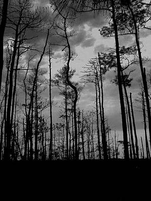 Wall Art - Photograph - Dusk In The Woods by Mickey Murphy
