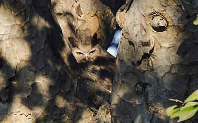 Photograph - Dusky Horned Owl  by Manjot Singh Sachdeva