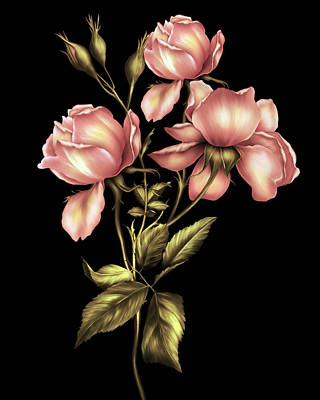 Digital Art - Dusky Peach Roses On Black by Georgiana Romanovna