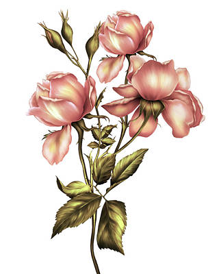 Digital Art - Dusky Peach Roses On White by Georgiana Romanovna