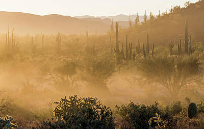 Photograph - Dust Storm In The Desert by Trish VanHousen