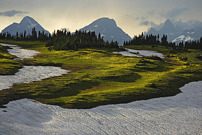 Natural Forces Photograph - Dustings Of Yellow Glacier Lilies Bloom by Michael Melford
